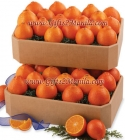 Double Box Juicy Orange